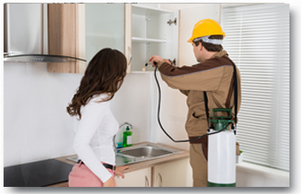 pest control mice solutions